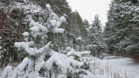 Ветвь дерева в снеге в ландшафте леса зимы природы рождества ветра отбрасывая Стоковая Фотография RF