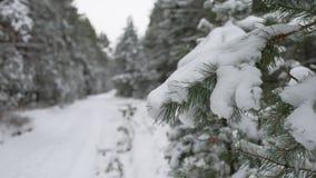 Ветвь дерева в снеге в ландшафте леса зимы природы рождества ветра отбрасывая Стоковые Фото