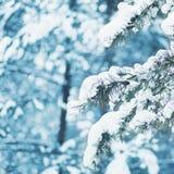 Ветвь дерева крупного плана ландшафта зимы покрытая снег Стоковые Изображения RF