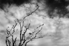 Ветвь дерева над голубым небом черная белизна Стоковая Фотография