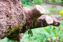 Ветвь дерева на парке сада Стоковые Фото