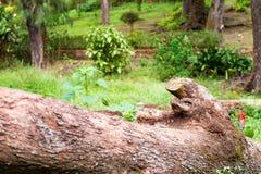 Ветвь дерева на парке сада Стоковое Изображение