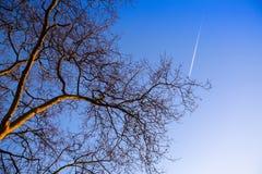 Ветвь дерева на предпосылке голубого неба Природа стоковая фотография rf