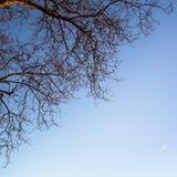 Ветвь дерева на предпосылке неба Природа стоковые изображения rf