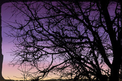 Ветвь дерева предпосылки вектора Стоковые Фото