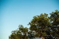Ветвь дерева с голубым небом Стоковые Изображения