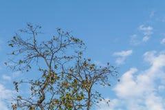 Ветвь дерева с голубым небом Стоковые Фотографии RF