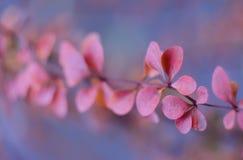 Ветвь дерева с листьями осени крупный план предпосылки осени красит красный цвет листьев плюща померанцовый Красные листья осени  Стоковое Изображение