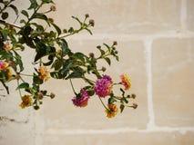 Ветвь дерева с розовыми и желтыми цветками Стоковое Изображение