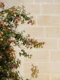Ветвь дерева с розовыми и желтыми цветками Стоковые Изображения RF