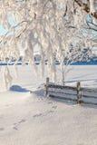 Ветвь дерева с снегом стоковая фотография rf