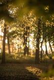 Ветвь дерева Стоковое Изображение RF