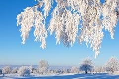 Ветвь дерева Horfroast Стоковое Изображение