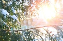 Ветвь дерева Snowy на заходе солнца Стоковые Фото