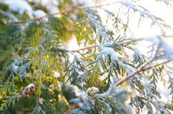 Ветвь дерева Snowy на заходе солнца Стоковое фото RF