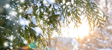 Ветвь дерева Snowy на заходе солнца Стоковое Изображение RF