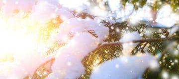 Ветвь дерева Snowy на заходе солнца Стоковое Фото