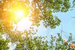 Ветвь лета с свежими зелеными листьями Позеленейте энергию Стоковые Изображения RF