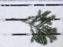 Ветвь ели Дугласа на снеге смотря на справедливо Стоковое фото RF