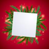 Ветвь ели с белой предпосылкой карточки Стоковые Фото