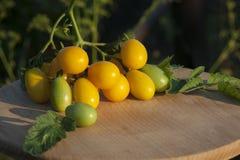 Ветвь желтых томатов с зеленым цветом выходит на доску кухни деревянную Освещение захода солнца Стоковое Изображение RF