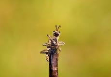 ветвь жука Стоковые Изображения RF