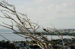 Ветвь залива Стоковая Фотография