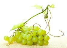 Ветвь зеленых виноградин и виноградного вина Стоковые Изображения