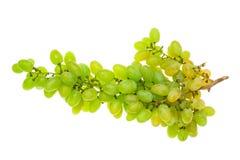 Ветвь зеленых виноградин на белой предпосылке Стоковое Изображение RF