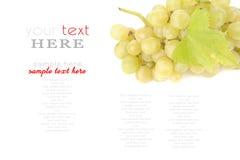 Ветвь зеленых виноградин Стоковая Фотография RF