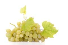 Ветвь зеленых виноградин Стоковые Изображения RF