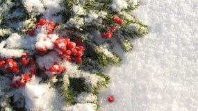 Ветвь зеленого цвета предпосылки зимы и красные ягоды покрытые с снегом Стоковое Изображение RF