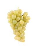 Ветвь зеленых виноградин Стоковая Фотография