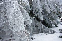 Ветвь зимы в заморозке Стоковая Фотография RF