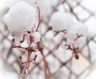 Ветвь зимы стоковая фотография rf
