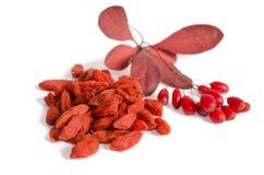Ветвь зрелых красных барбарисов и высушенных ягод goji стоковое фото