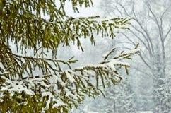 Снежк-покрытые деревья в парке зимы. Стоковое Фото