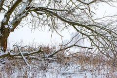 Ветвь лиственного дерева покрытая снегом Ландшафт Стоковые Изображения RF