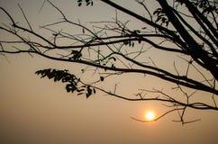 Ветвь и захода солнца задняя часть внутри Стоковое Изображение RF