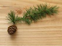 Ветвь и конус Стоковое Изображение RF
