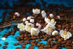 Ветвь и кофе цветения Стоковое Изображение