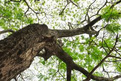 Ветвь и лист дерева красивые в взгляде предпосылки леса нижнем стоп дня мировой окружающей среды концепции разрушает лес стоковое изображение rf
