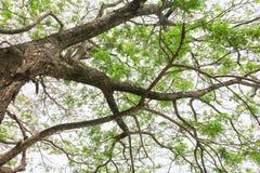 Ветвь и лист дерева красивые в взгляде предпосылки леса нижнем стоп дня мировой окружающей среды концепции разрушает лес стоковая фотография rf