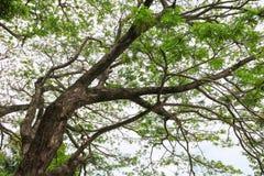 Ветвь и лист дерева красивые в взгляде предпосылки леса нижнем стоп дня мировой окружающей среды концепции разрушает лес стоковое изображение