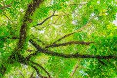 Ветвь и лист дерева красивые в взгляде предпосылки леса нижнем Стоковое Изображение