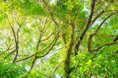 Ветвь и лист дерева красивые в взгляде предпосылки леса нижнем Стоковое Фото