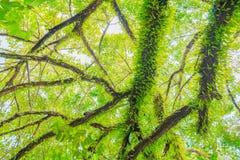 Ветвь и лист дерева красивые в взгляде предпосылки леса нижнем Стоковое фото RF