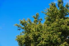Ветвь и лист дерева красивые в лесе на взгляде предпосылки голубого неба нижнем стоп дня мировой окружающей среды концепции разру стоковые фото