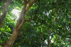 Ветвь и лист красивого дерева и солнечности светлое справедливое в взгляде предпосылки леса нижнем St дня мировой окружающей сред стоковые фотографии rf