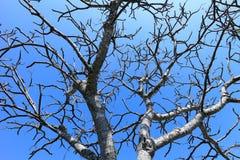 Ветвь и небо дерева Стоковые Изображения